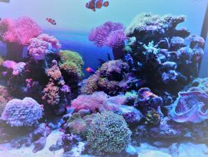 幸せ邸珊瑚