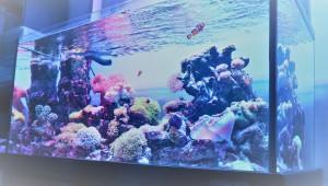 幸せ邸珊瑚2